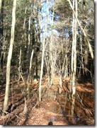 Norbyland Vernal Pool